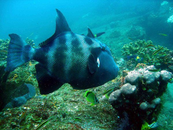 Cabo Sails Snorkeling Tours