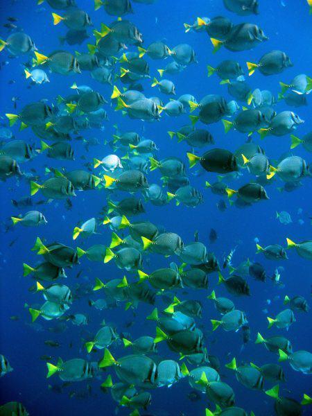 Cabo San Lucas Snorkeling Tours