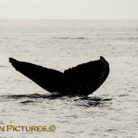 Private Cabo Whale Watching Tours