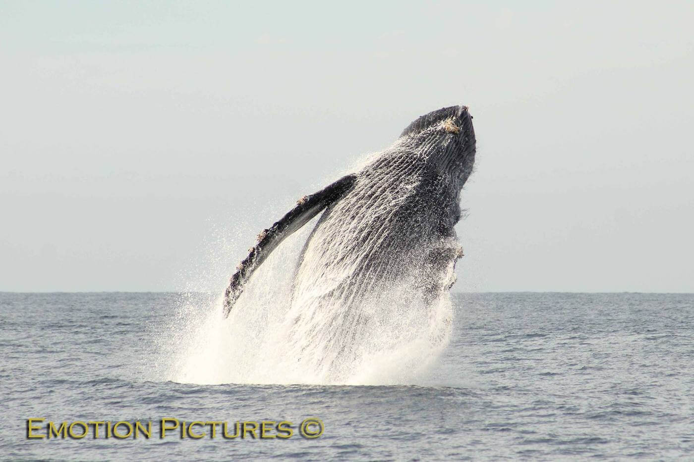Cabo whale watching tours
