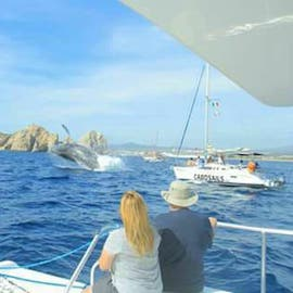 Amazing Whale Watching in Cabo San Lucas