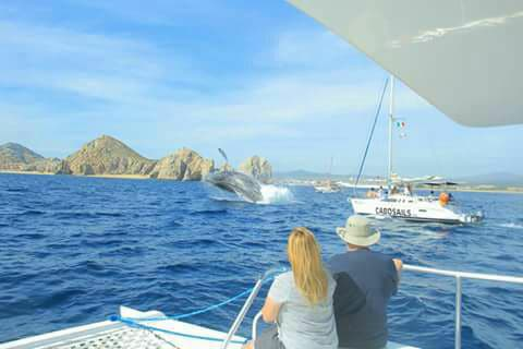 whale watching with Cabo Sails