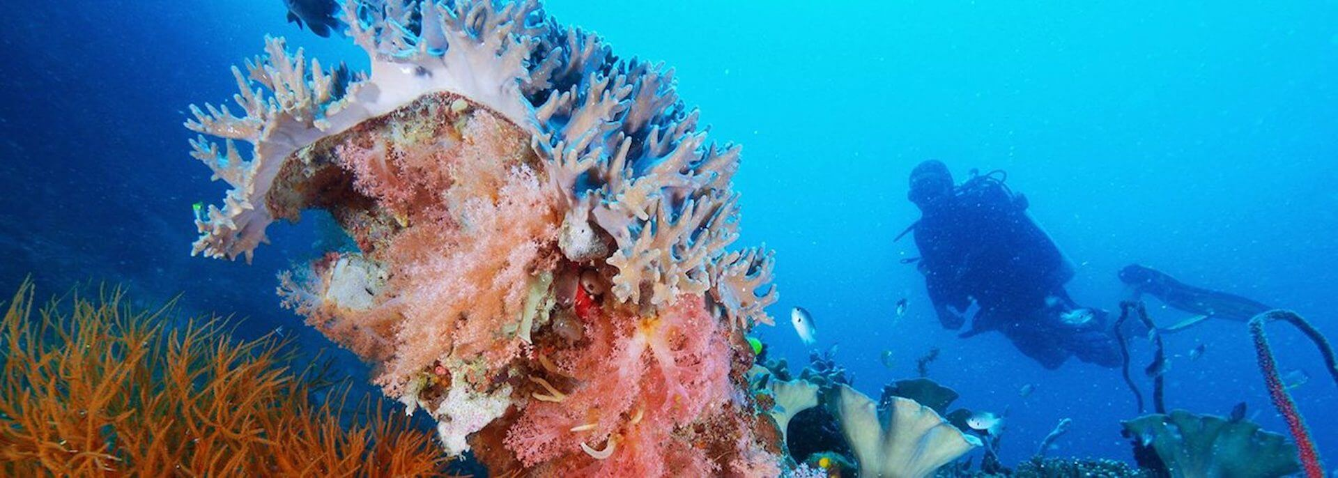 Club Paradise Divers