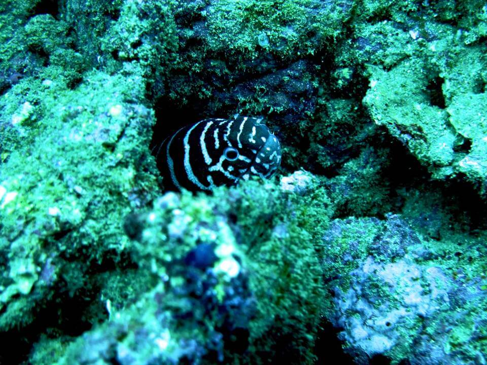 Photo from Dive Zihua
