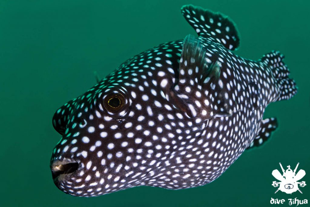 Photo by Divebuddies4life for Dive Zihua